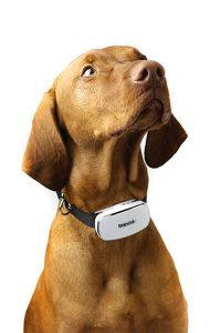 Tracca Dog GPS Prototype