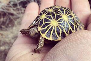 3d printed techno tortoises